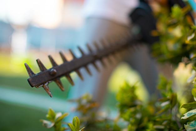 Cortar uma cobertura com um aparador de cerca viva elétrico. foco seletivo. o jardineiro está aparando a cerca viva ou o tuja.