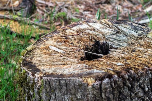 Corte a árvore na floresta, fotografada com profundidade muito rasa