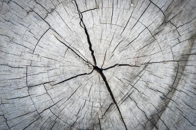 Corte a madeira de crack de tronco de árvore resumo de textura de fundo