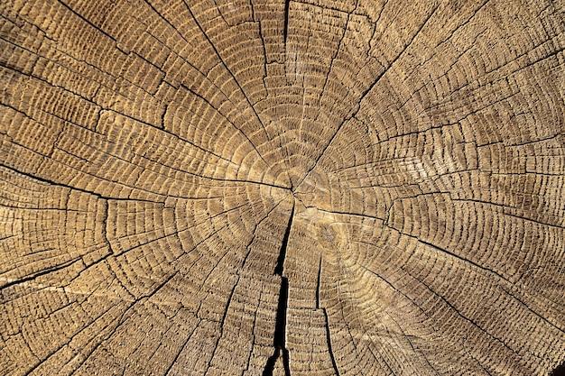 Corte a seção da árvore de madeira com rachaduras e anéis anuais