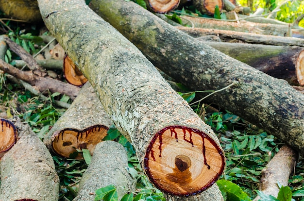 Corte de madeira para lenha