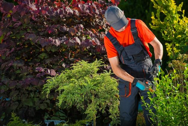 Corte de plantas de jardineiro