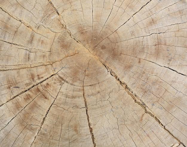 Corte de seção transversal da textura de madeira do tronco com anéis de árvore.