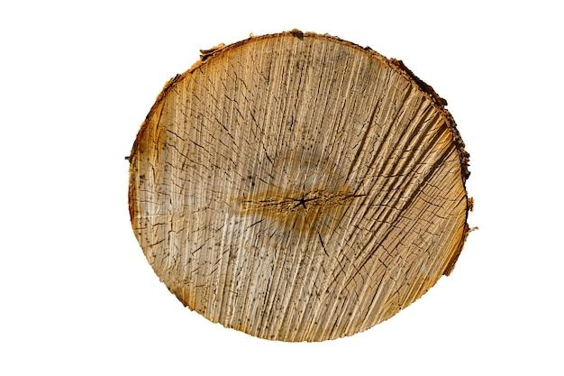 Corte do tronco da bétula isolado em um fundo branco. foto de alta qualidade