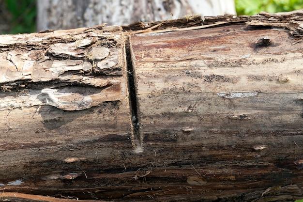 Corte em um tronco - um pequeno corte na árvore durante seu processamento, foco no corte, dof pequeno