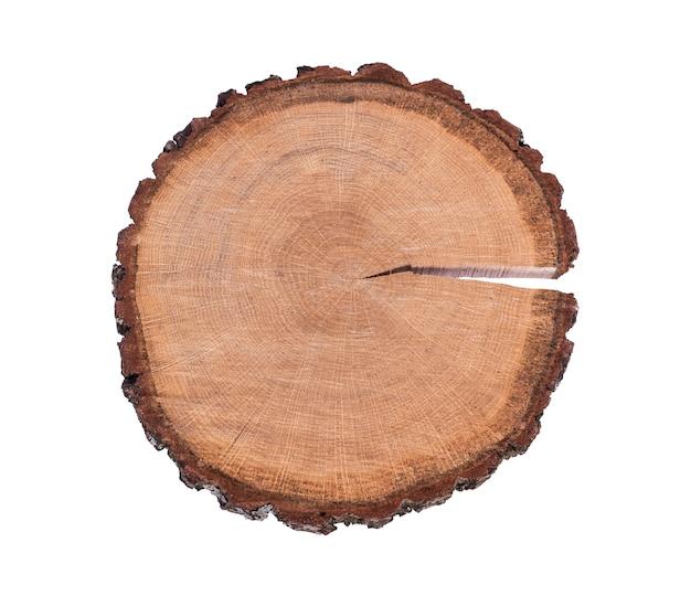 Corte o tronco de árvore isolado no branco