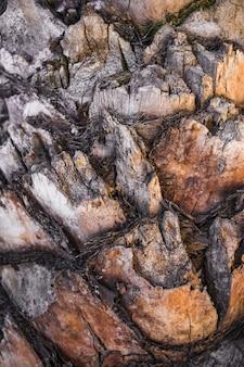 Cortes de casca de árvore velha