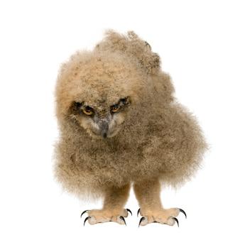 Coruja de águia euro-asiática - bubo do bubo em um branco isolado