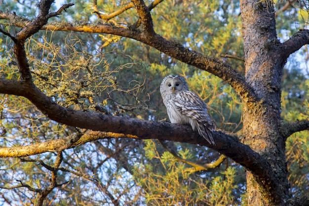 Coruja marrom e branca em galho de árvore