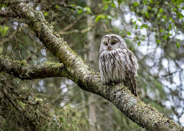 Coruja marrom sentada no galho de uma árvore