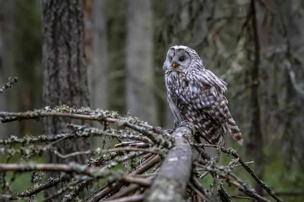 Coruja sentada no galho de uma árvore na floresta