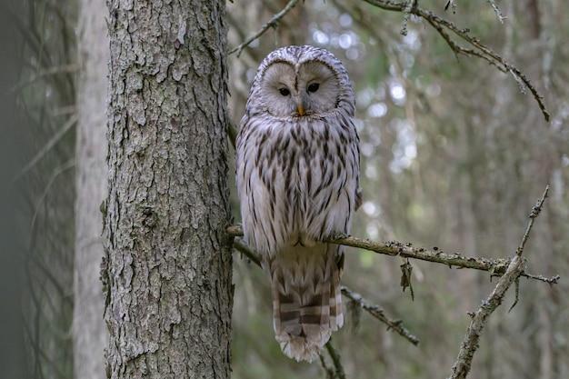 Coruja sentada no galho de uma árvore olhando para a câmera