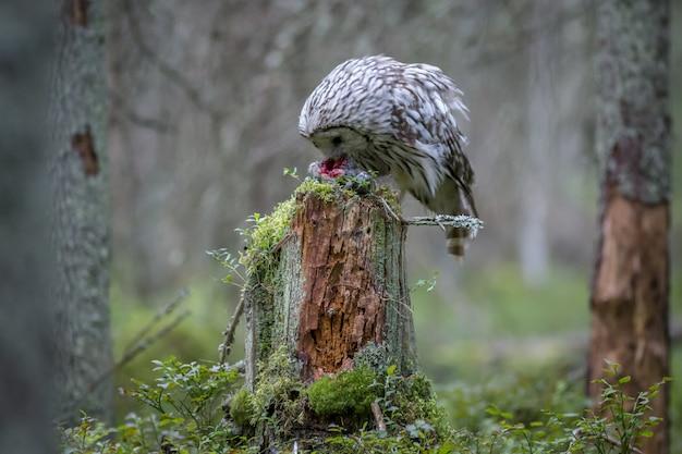 Coruja sentada no tronco de uma árvore na floresta
