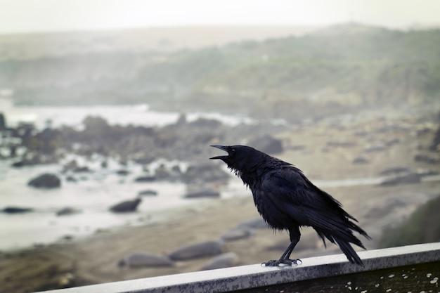 Corvo empoleirado na parede de concreto com vista para o mar