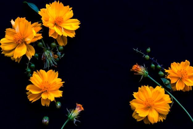 Cosmos flores arranjo estilo cartão postal em preto