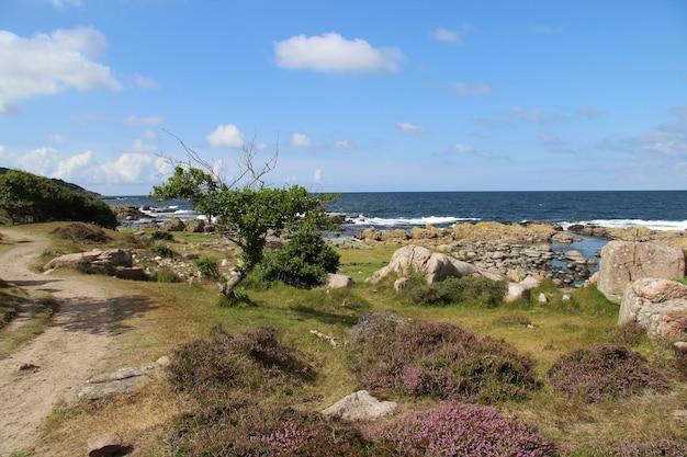 Costa coberta de vegetação cercada pelo mar em bornholm, dinamarca