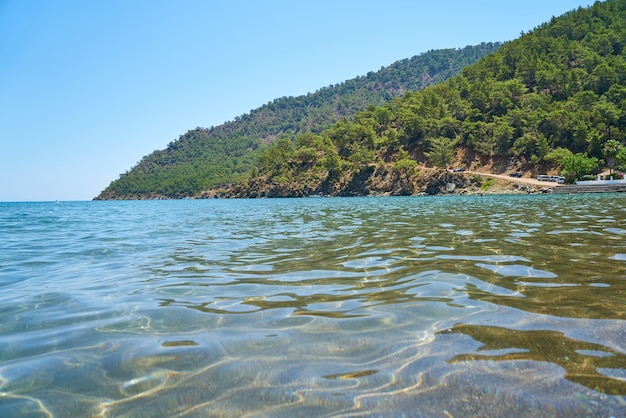 Costa com árvores com mar ao redor