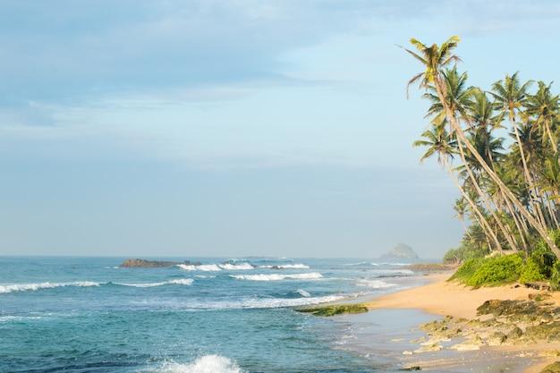Costa com palmeiras