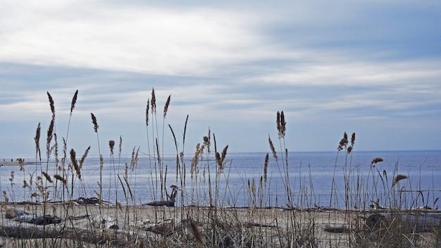 Costa do mar báltico