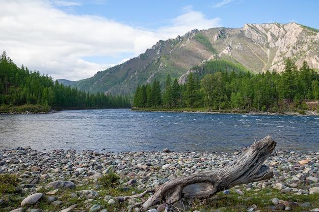 Costa do rio da montanha com seixos coloridos, belas rochas e floresta de coníferas verdes