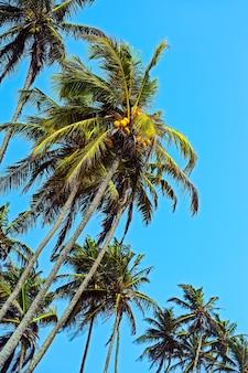 Costa oceânica do sri lanka nos trópicos