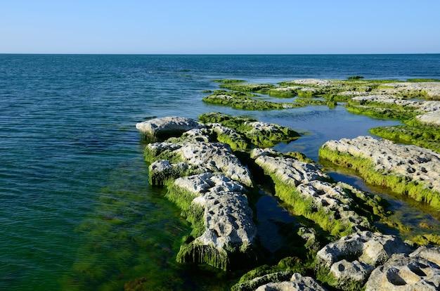 Costa rochosa do mar cáspio coberta por algas no verão