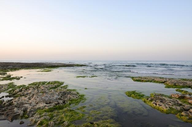 Costa rochosa do mar cáspio coberta por algas
