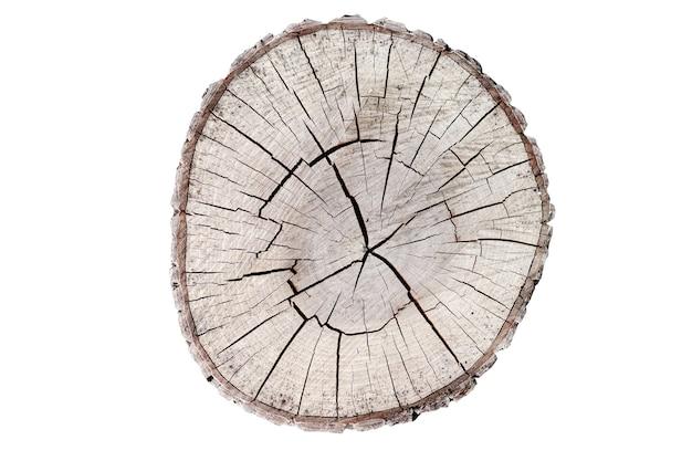 Coto de madeira isolado no fundo branco. arredondar a árvore cortada com anéis anuais como uma textura de madeira.