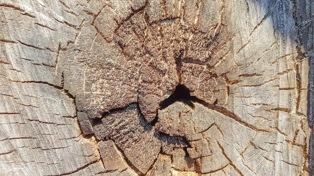 Coto velho de madeira, fundo de textura de madeira. árvore serrada com rachaduras. arredondar a árvore cortada com anéis anuais como uma textura de madeira.