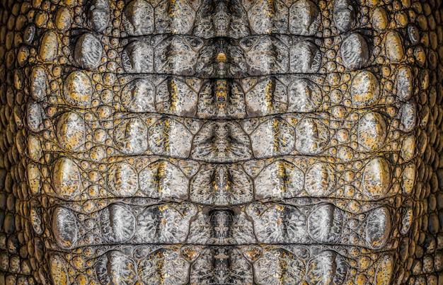 Couro de crocodilo, foto closeup como plano de fundo