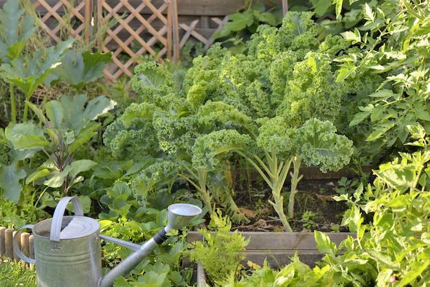 Couve couve crescendo em uma horta e outra planta