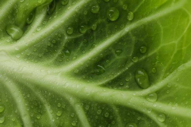 Couve verde fresca com gotas de água ao todo, close-up