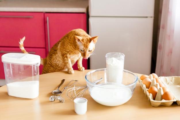 Cozinha e mesa, panificação, tigelas com farinha, leite, açúcar, delicioso café da manhã para a família, cozinhando com crianças, gato e ovos