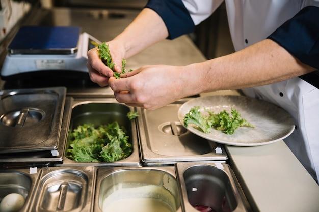Cozinhe colocando alface verde no prato