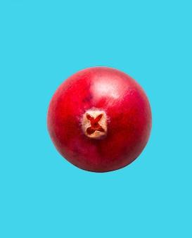 Cranberry isolado em azul