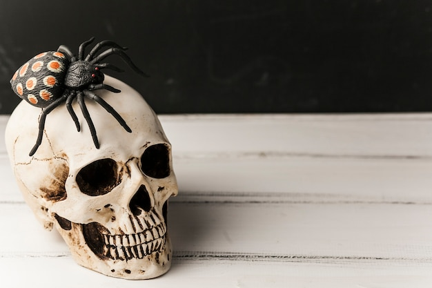 Crânio assustador com aranha no topo