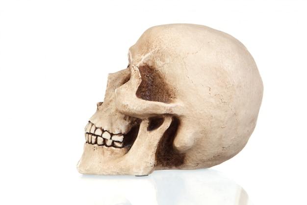 Crânio assustador com reflexão