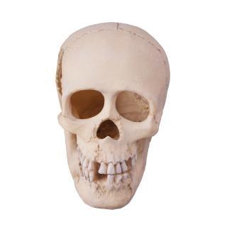 Crânio assustador