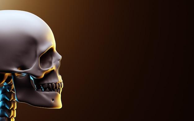 Crânio com fundo escuro. ilustração 3d