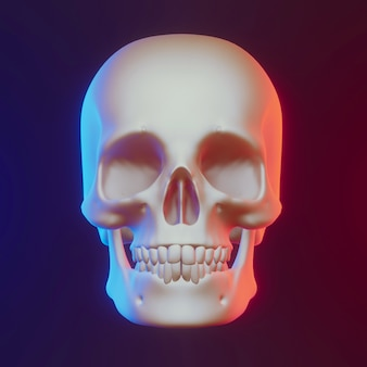 Crânio com iluminação agradável, render 3d