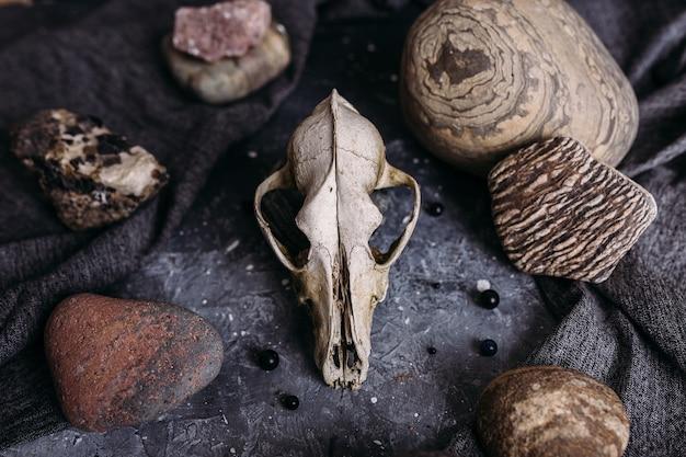 Crânio de cachorro velho e pedras na mesa da bruxa atmosfera escura e misteriosa