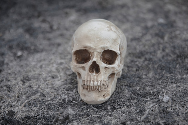 Crânio de cimento criado para sessões de fotos