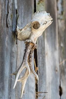 Crânio de veado pendurado em uma parede ao ar livre.