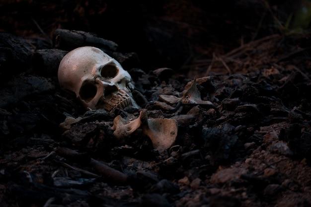 Crânio e ossos escavados do fosso no cemitério assustador que tem pouca luz