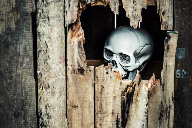 Crânio em caixa de madeira