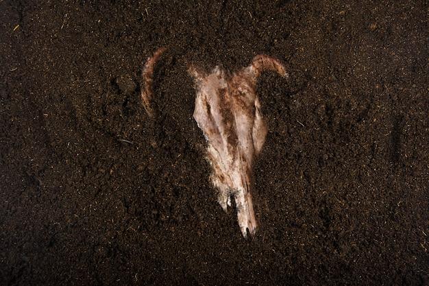 Crânio enterrado no chão