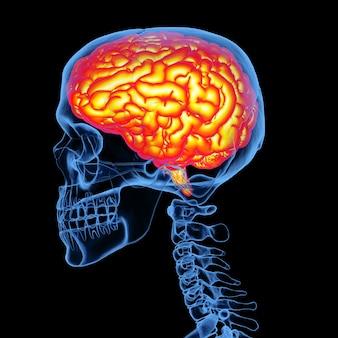 Crânio humano de raio-x renderização 3d com cérebro isolado em fundo preto
