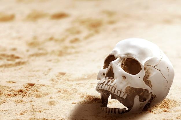 Crânio humano na areia