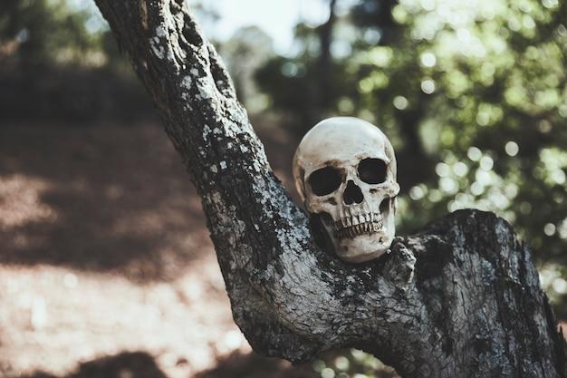 Crânio sombrio colocado em madeira