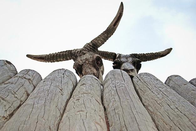 Crânios com chifres feitos de madeira olhando para uma cerca velha